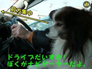 20120303doraibudaisuki.jpg