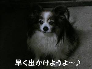 lumix2012222 022.jpg